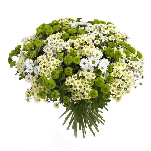 """Хризантемы """"Вальс цветов"""""""
