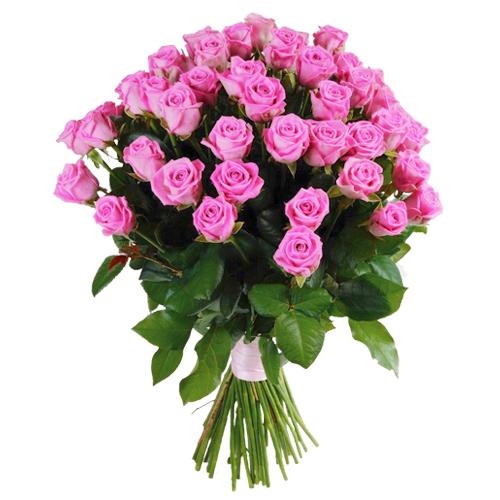 Роза Аква 80 см