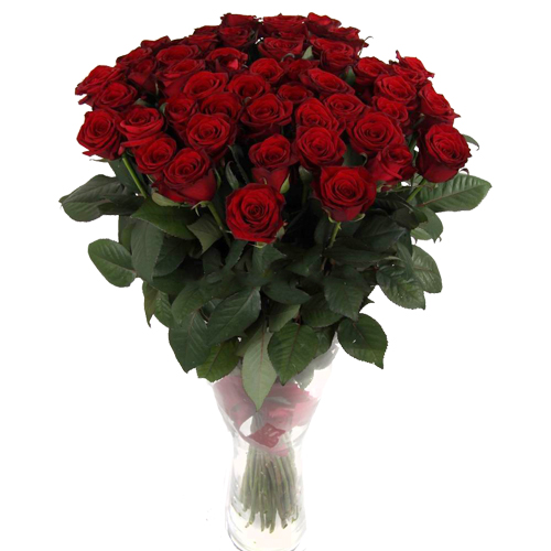 Роза Гран При 70 см