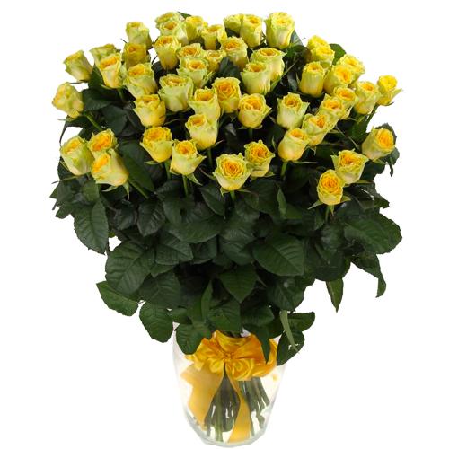 Роза Илиос 80 см