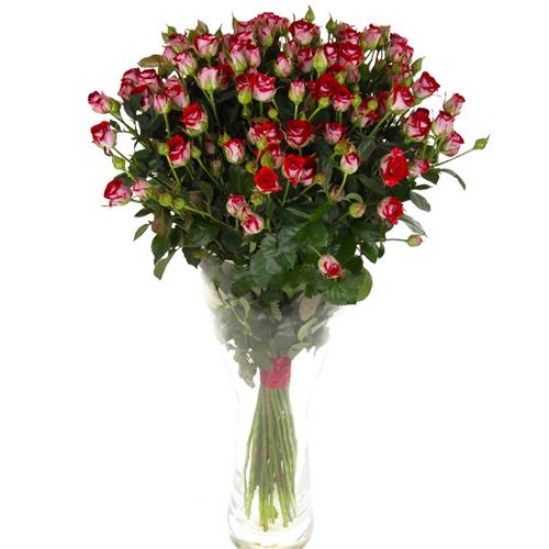 Роза Руби Стар 80 см