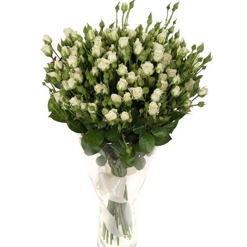 Роза Сноуфлейк 70 см
