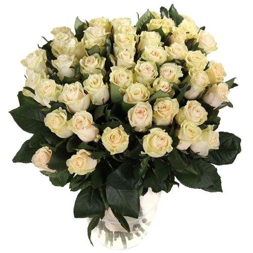 Роза Талея 70 см