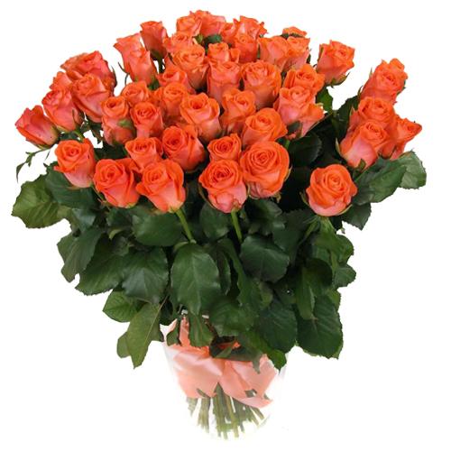 Роза Вау 80 см